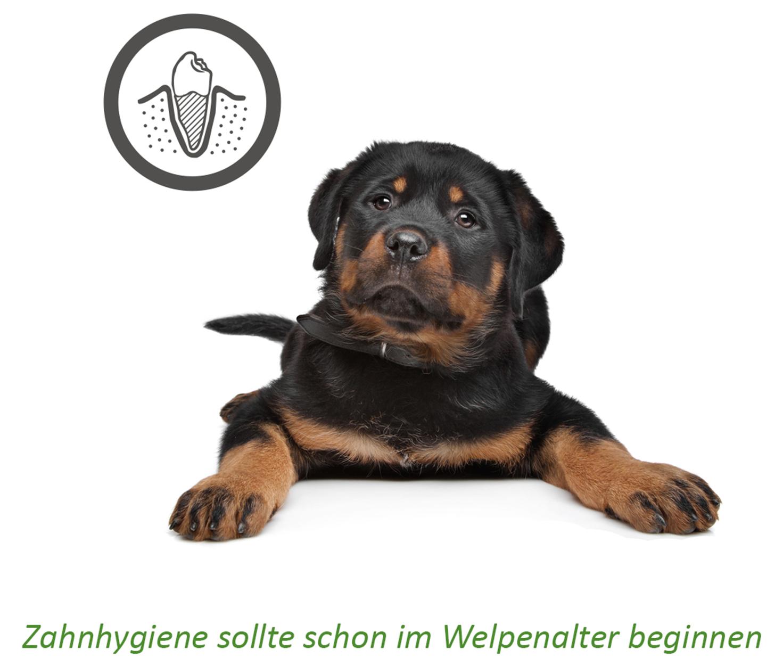 Großartig Hund Zähne Anatomie Zeitgenössisch - Menschliche Anatomie ...