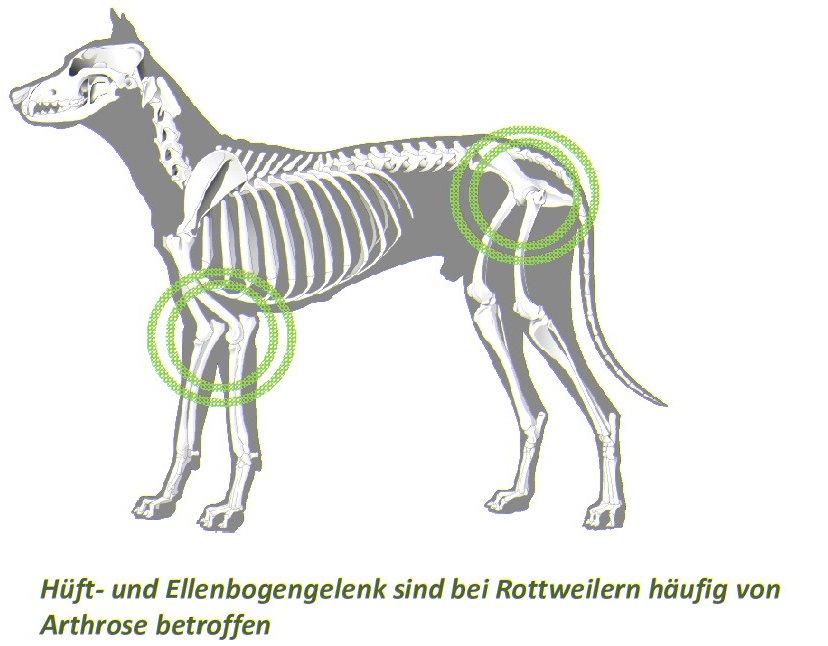 Gelenkerkrankungen bei Hunden – Entstehung, Symptome und ...